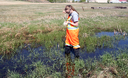 Taylor King inspects water for mosquito larvae on wetland near the Brandon Municipal Cemetery.