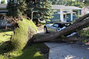 An uprooted tree on Balmoral Bay rests on a convertible following a severe thunderstorm that wreaked havoc across Brandon in this July 2014 photo. Climate resiliency will be the focus of a public event at Brandon Design Studio on Princess Avenue this evening.