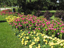 Uproar Rose' zinnias are used extensively in this border at the International Peace Garden.