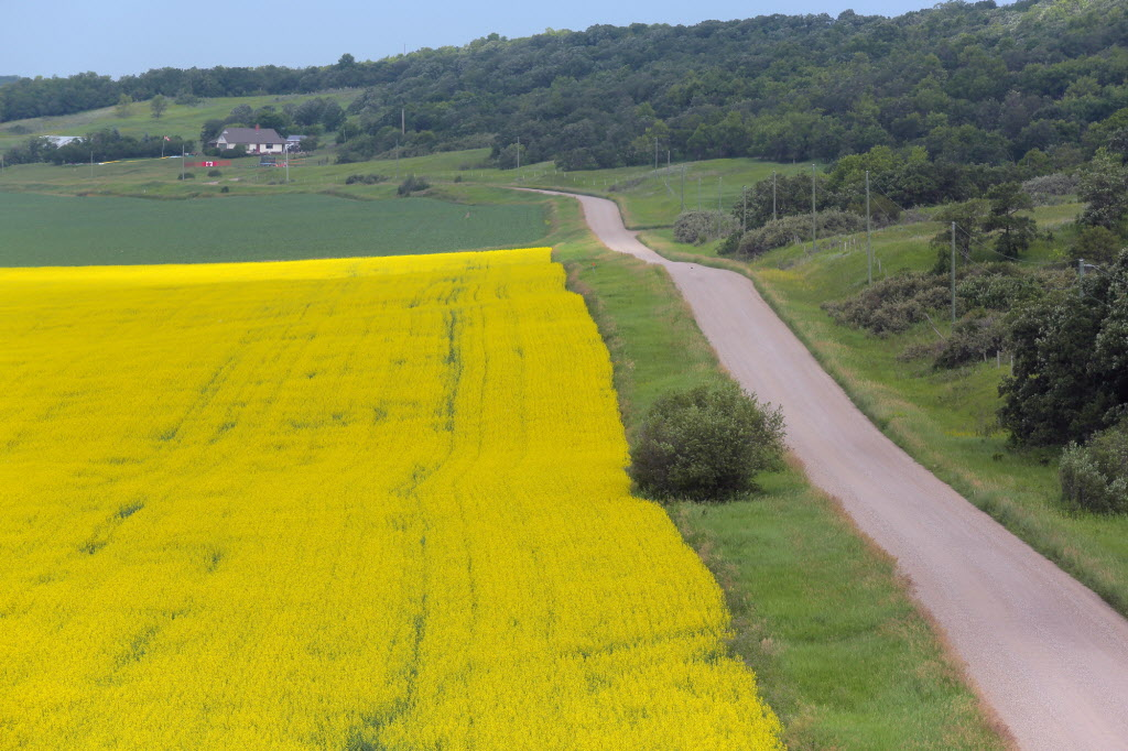 The canola growers' ambitious goal will require a huge hike in productivity.