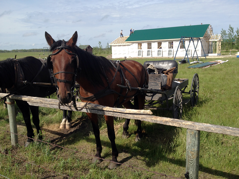 A horse and buggy stand outside a new school being built at an Old Order Mennonite community which had dozens of its children apprehended last year due to allegations of abuse. About half of the children have since returned, and the school being built this week is seen as a symbol of the community's effort to move forward.