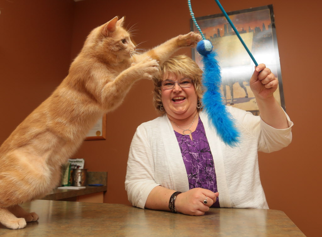 Brandon veterinarian Dr. Sandy Barclay says declawing a cat entails amputation of its toes.