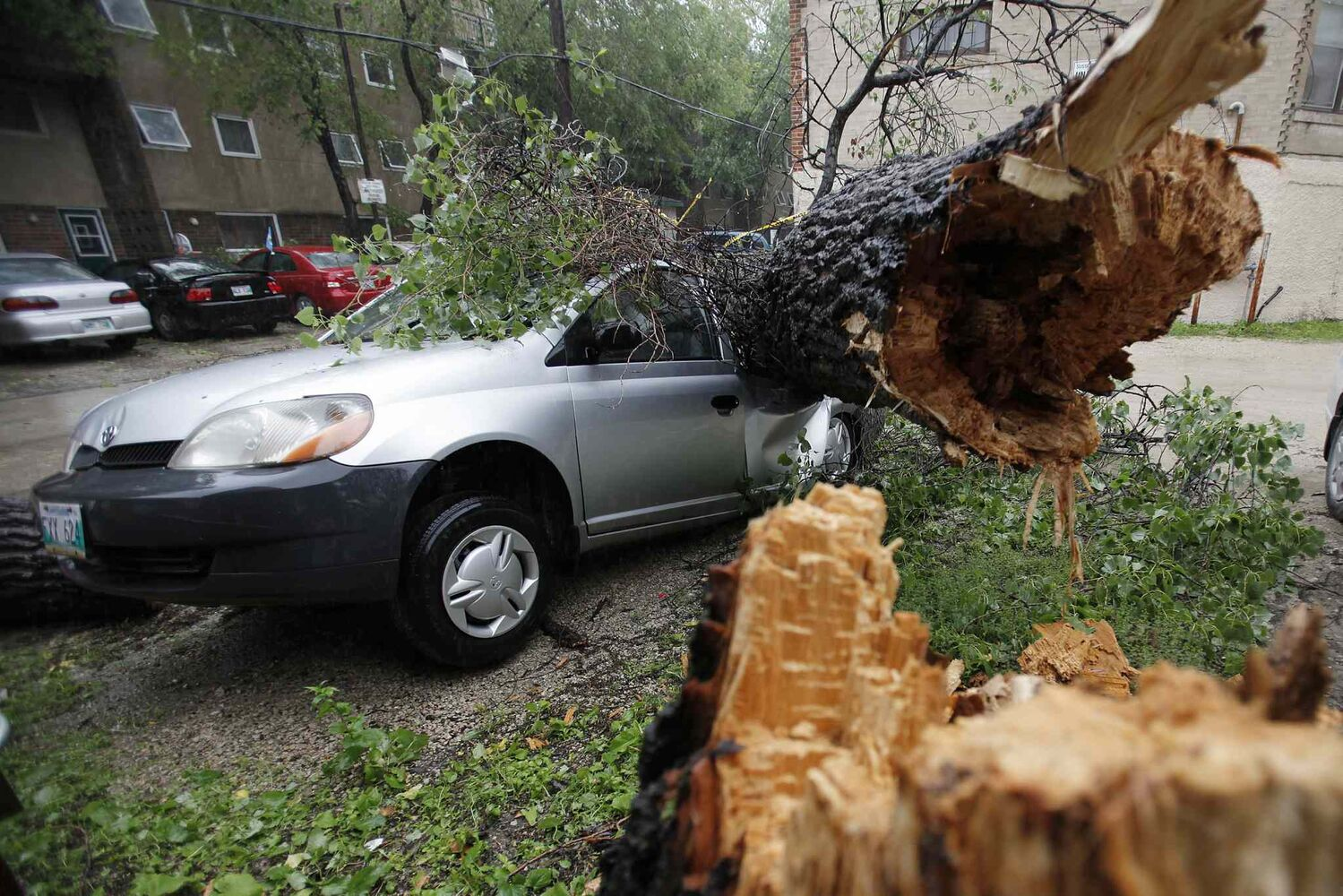 A tree blown over by strong winds crashes through the roof of a parked car in Winnipeg, Sunday morning, June 29, 2014.  (John Woods / The Canadian Press)