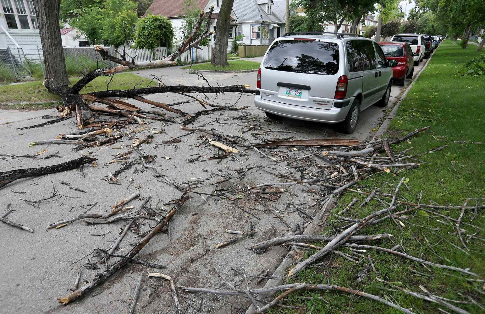 A large tree branch lays across Aberdeen Avenue after hitting a van between Salter and Charles after strong winds overnight, Sunday, June 29, 2014.  (Trevor Hagan / Winnipeg Free Press)
