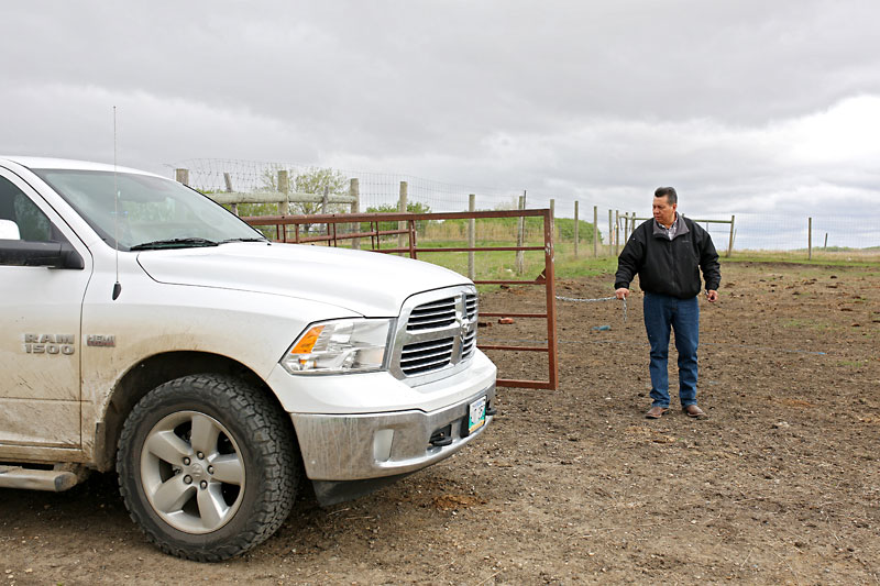 Sioux Valley Dakota Nation Chief Vince Tacan opens a gate to the bison enclosure as his brother, Tony Tacan, drives in while going to check in on the First Nation's bison herd on Friday. Eight calves have been born so far this spring, including the rare white bison.
