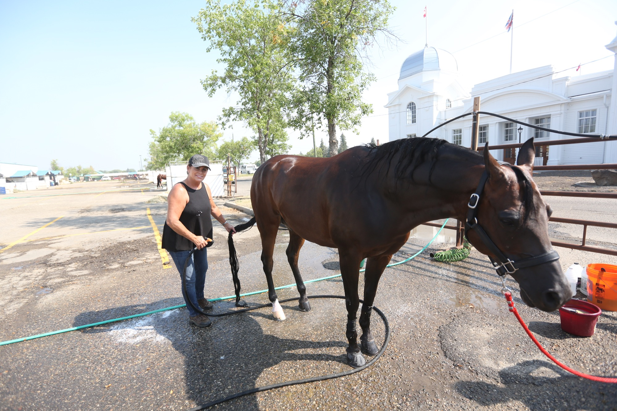 Duke the horse got a bath from owner Jennifer Magliulo outside the Keystone Centre on Sunday. It was all preparation for the 2018 Canadian National Arabian & Half-Arabian Championship Horse Show that kicked off on Sunday.