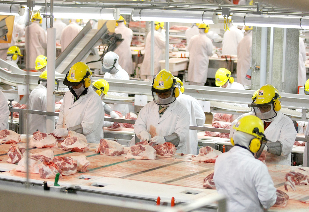 Brandon Sun Maple Leaf Foods employees work at Brandon's hog processing plant cutting floor in this 2009 photo. (File)