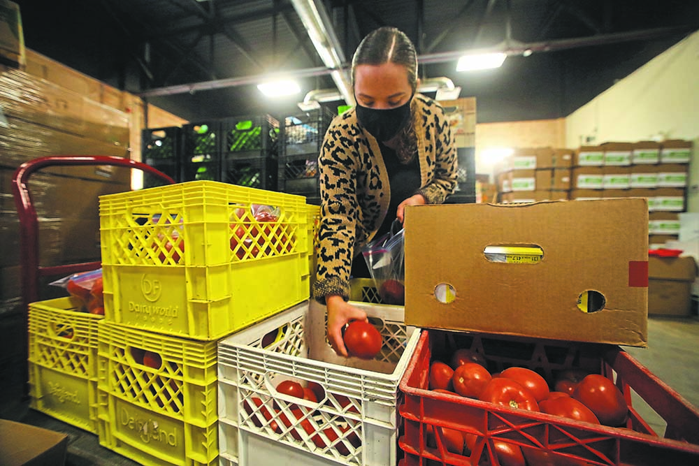 Volunteer Richelle Williams, a social work student from the University of Regina, sorts crates of donated tomatoes on Friday morning before the daily rush on food hampers at Samaritan House on Pacific Avenue.