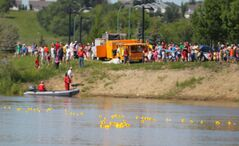 Ducks float along the Assiniboine River during Sunday's Riverbank Discovery Centre Duck Race fundraiser during the city's Canada Day celebrations.