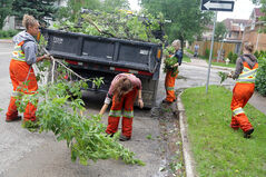 City crews clear fallen branches from Louise Avenue near 12th Street after a weekend of violent wind and rain on Monday.