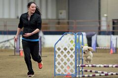 Kiera Brewster of Erickson runs beside her toy poodle Isaac as he leaps over an obstacle during the Crocus Obedience and Kennel Club's agility          trials at the Westoba Agricultural Centre of Excellence at the Keystone Centre on Saturday.