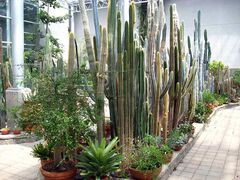 Wide brick pathways make wandering about the Conservatory easy, even for those folks who have mobility issues.