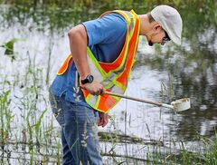 City of Brandon parks department employee Cale Gushulak scoops up pond water from a clearing on Hilton Avenue while looking for mosquito larvae last year. The city will double the amount of employees it tasks with killing mosquito larvae this year.