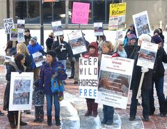 Demonstrators at Calgary's McDougall Centre protest a plan by the Alberta government to cull 200 feral horses in central Alberta, in Calgary, Thursday, Feb. 6, 2014. THE CANADIAN PRESS/Bill Graveland