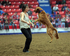 Brandon's Melanie Hart and her golden retriever Whisky have been performing with the SuperDogs for 12 years. Hart and Whisky perform a dance number during the SuperDogs' main arena performance at the Royal Manitoba Winter Fair on Tuesday afternoon.