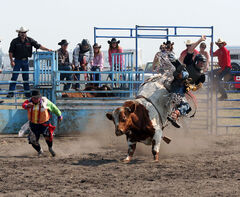 Sean Tesarski takes a tumble off Tough Duck during the bull-riding competition at the Sprucewoods Heartland Rodeo on Saturday.
