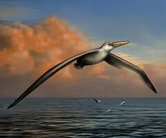 This undated image provided by the Bruce Museum shows a reconstruction image of the world's largest-ever flying bird, Pelagornis sandersi, as identified by Daniel Ksepka, Curator of Science at the Bruce Museum in Greenwich, Conn. The skeleton was discovered in 1983 near Charleston, but its first formal description was released Monday, July 7, 2014, by the Proceedings of the National Academy of Sciences. The gigantic bird had an estimated wingspan of around 21 feet, about the height of a giraffe. (AP Photo/Bruce Museum, Liz Bradford)