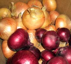 Onions store best where it is warm and dry.