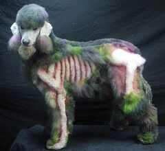 This Sept. 2013 photo released by The National Association of Professional Creative Groomers shows a 5 year old poodle, Xerxes, dressed as a Zombie for Halloween at the A.B. Grooming & Pet Spa in Childersburg, Ala. (AP Photo/NAPCG/Amy Brown)