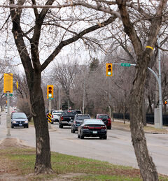 Several trees located in the median on Victoria Avenue will have to be removed to pave the way for extended turning lanes to Sixth Street.