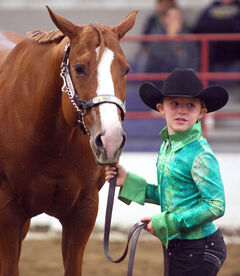 Jayda Gabrielle shows her horse, Sally, during the Thanksgiving Classic and Versatility Ranch Horse Competition at the Keystone Centre over the weekend. Gabrielle is the fourth generation in her family to work with quarter horses and finished second in her class.