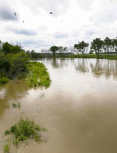The rising Assiniboine River at Highway 430.