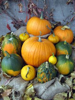 Pumpkins come in a variety of shapes, sizes, colours, and textures.