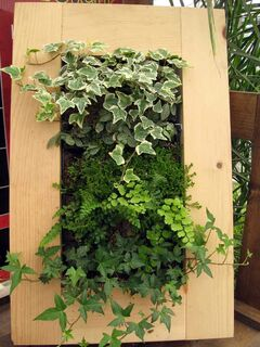 The small living wall viewed at the Green Spot this past spring.