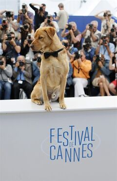 "FILE- In this Saturday, May 17, 2014 file photo, a dog sits on a table during a photo call for White God (Feher Isten) at the 67th international film festival, Cannes, southern France. An unusually high number of films in the 2014 selection feature creatures that meet gruesome ends in long drawn-out sequences that are sometimes crucial to the plot. Hungarian director Kornel Mundruczo's film ""White God"" sees a loveable K-9 being mistreated and abandoned on the street. (AP Photo/Alastair Grant, File)"