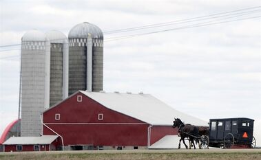 A Mennonite horse and buggy on travels on the side of the road near St. Jacobs, Ont., just north of Waterloo on March 31, 2012. Much like the past when pioneer families travelled west for farmland to call their own, two groups of Amish families from Ontario are heading east to till the fertile, red soil of Prince Edward Island and establish a new home. THE CANADIAN PRESS/Adam Gagnon