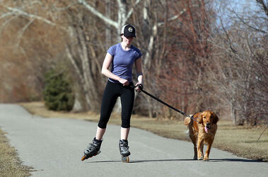 Kristen Brown makes her way along the southern section of 34th Street with her golden retriever, named Fenway after the baseball park in Boston, while out for an afternoon skate on Tuesday.