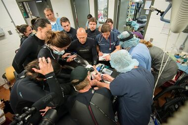 A team of Vancouver Aquarium and U.S. experts performs groundbreaking emergency surgery on Hana, a Pacific white-sided dolphin suffering from a severe gastrointestinal disorder. THE CANADIAN PRESS/ho-Vancouver Aquarium