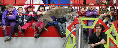 Young spectators shout their encouragements during the SuperDogs show on Monday.