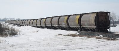 Idle grain cars sit on the tracks south of Kemnay, Man., on Wednesday.