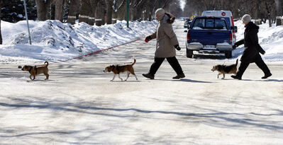 Len (left) and Jocelyn Goodine are bundled up walking their dogs Jackie, Sammy and Riley on Grosvenor Avenue Wednesday as winter's grip still holds the city on the official first day of spring.