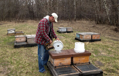 Will Clark, owner of the Rivercrest Honey Farm, feeds sugar syrup to one of his hives at a site located south of Brandon. Clark says the cold spring has been hard on bees, as trees and flowers have yet to create nectar.