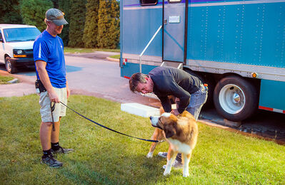 "Actor Dennis Quaid pets a dog during a break in the filming of the movie ""A Dog's Purpose"" in Brandon on Friday. Parts of the movie are also being shot in Virden and Minnedosa."