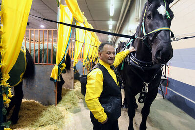 Lyle Brown with Brown's Percherons of Lenore poses with one of his horses prior to competing in the Draft Heavy Two-Horse Hitch at the Royal Manitoba Winter Fair on Wednesday.