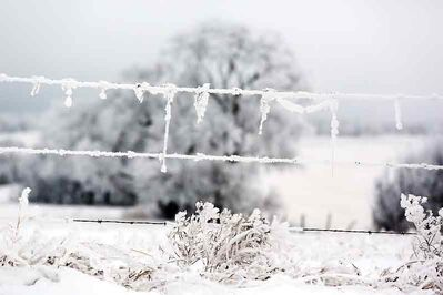 Hoarfrost clings to the tree branches and fence wire in a pasture field south of the Brandon Hills on Tuesday morning.