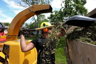 Arbourist Chris Saborowski with Bee EZ Tree Service packs down wood chips in a trailer while working to remove fallen trees from the yard of Garry Nicol on Sixth Street just north of Aberdeen Avenue on Monday.