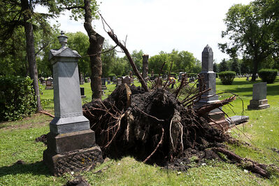 Downed trees in the Brandon Municipal Cemetery.