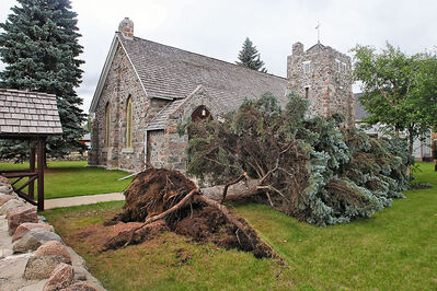 A large spruce tree lies beside the St. Mary's Anglican Church in Virden on Tuesday following a monster storm Monday night.