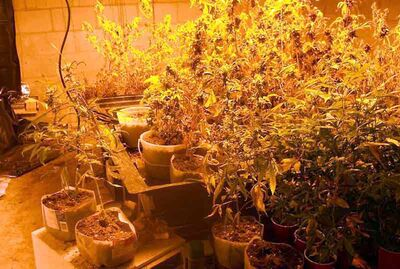 Spruce Plains RCMP seized about 140 marijuana plants during a raid on a Plumas residence Monday.
