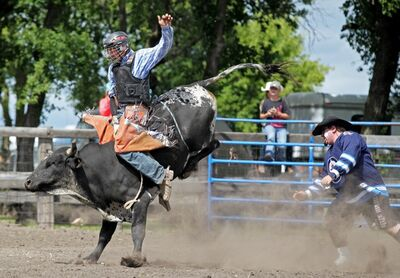 Keenan McMahon tries to stay atop his steer during the Junior Steer Riding event at the Souris and Glenwood Rodeo on Sunday afternoon.