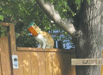 THE CANADIAN PRESS FILES