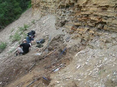Brandon University students wrap fossil discoveries at Driftwood Canyon, B.C.