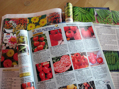 Most catalogues have great coloured pictures. If the one you use doesn't, then look for pictures in the ones that do.