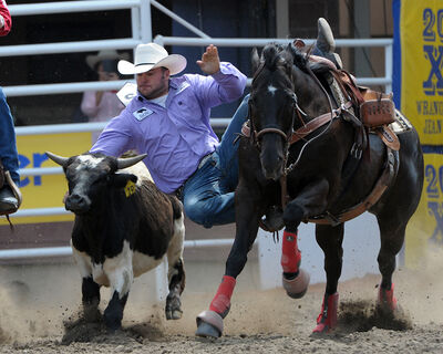 Neepawa's Justin Miller competes in steer wrestling at the Calgary Stampede earlier this month. Now in his second season on the Canadian professional circuit after being named rookie of the year in 2013, the 25-year-old won a go-round in his time competing at the Stampede and qualified for the final weekend.