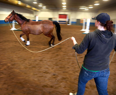 Hannah Ingram lets her horse Atlas run during a warm-up at the Keystone Centre on Saturday.