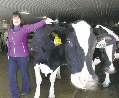 Lisa Dyck with one of her dairy cows. She is the only independent ice-cream producer in Manitoba in memory.